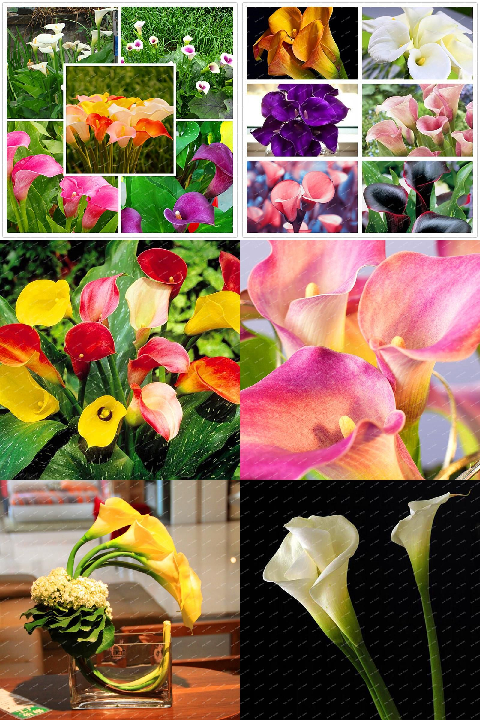 Visit to buy 2017 new arrival flower seeds 200 pcs 100 real cheap flower seeds buy quality flowers for directly from china seeds flower seed suppliers 2017 new arrival flower seeds 200 pcs real bonsai colorful izmirmasajfo