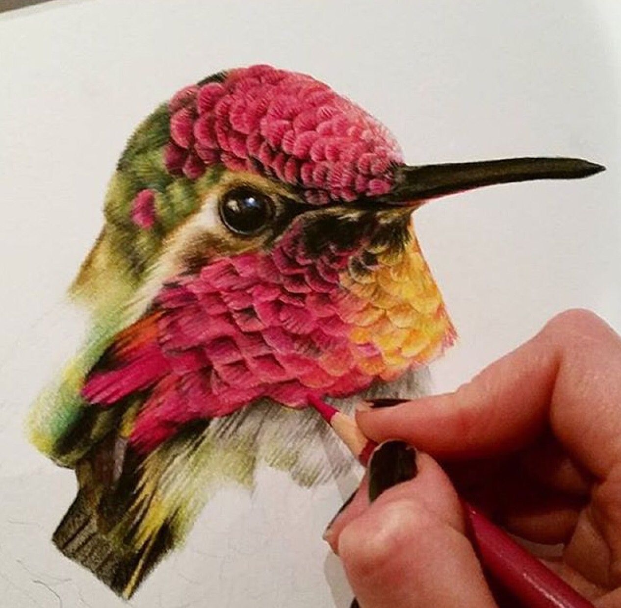 Colibri in 2019 | Color pencil art, Art drawings, Pencil ...