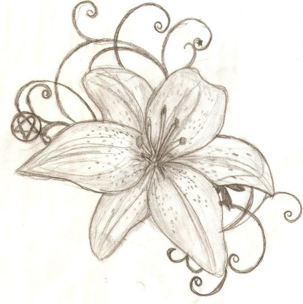 1021x1024 Lily Flower Drawing Tiger Lily Flower Drawing ...