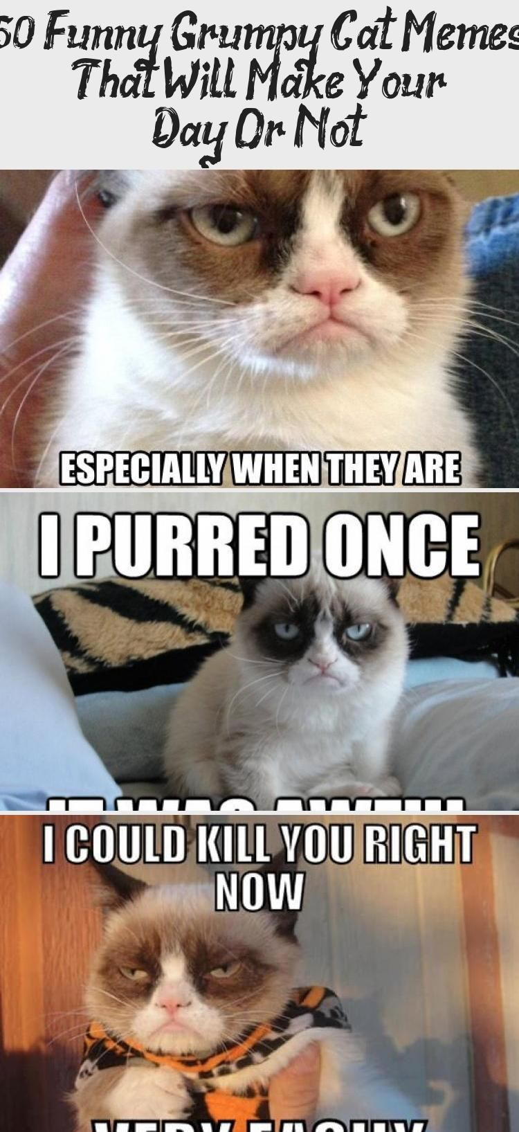 My Blog En Blog in 2020 Funny grumpy cat memes, Grumpy