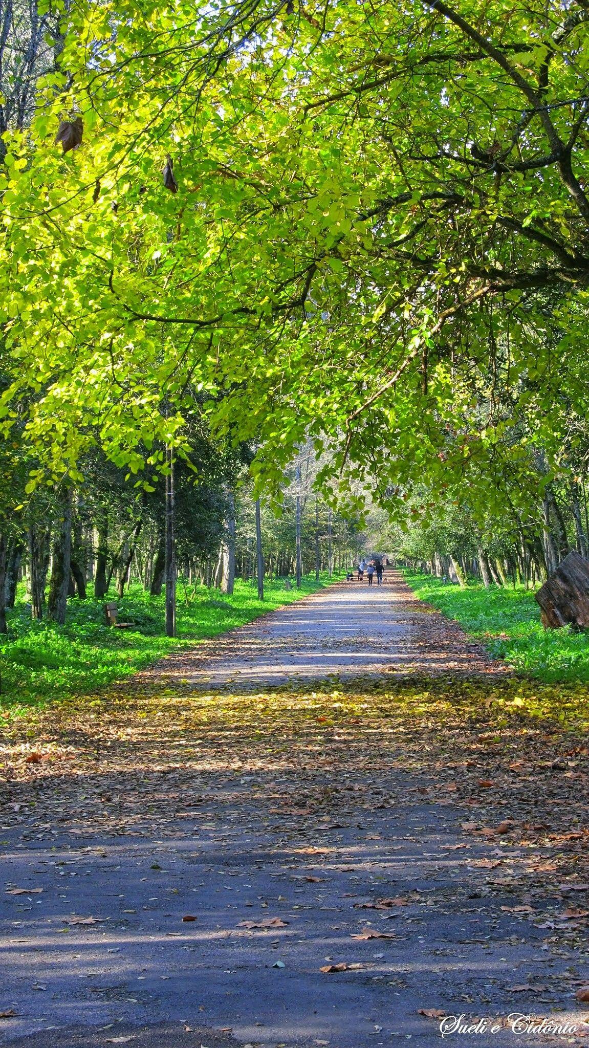 Begrund Blur Photo Background Photo Background Images Photo Background Images Hd