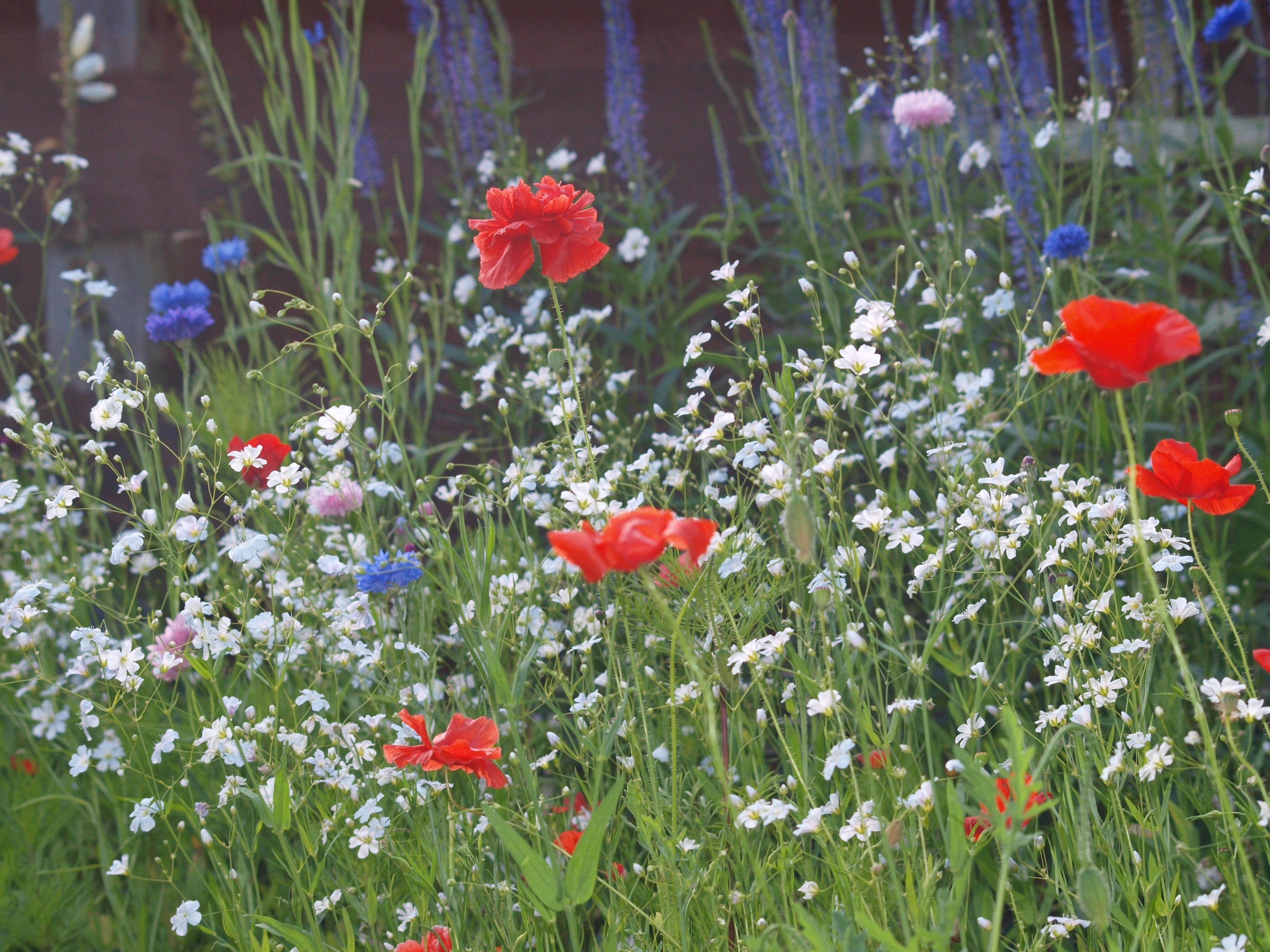 Wildflower Meadow By Sheila Phillips Wild Flower Meadowwild Flowersgarden