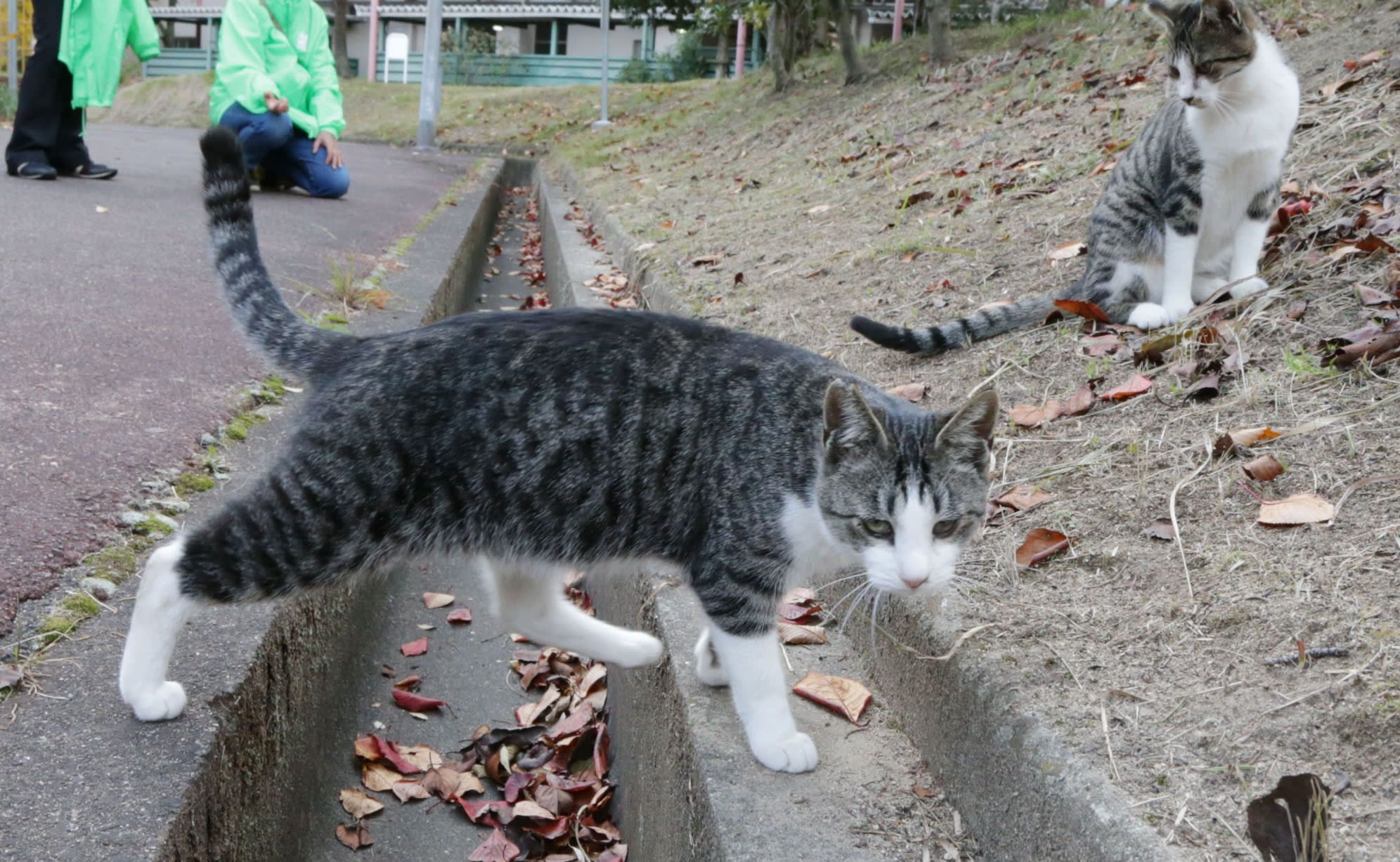 Kidney Drug Promises To Help Cats Purr Into Old Age Animal