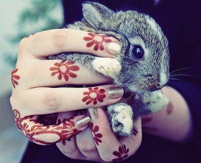 Henna flowers and dwarf bunny