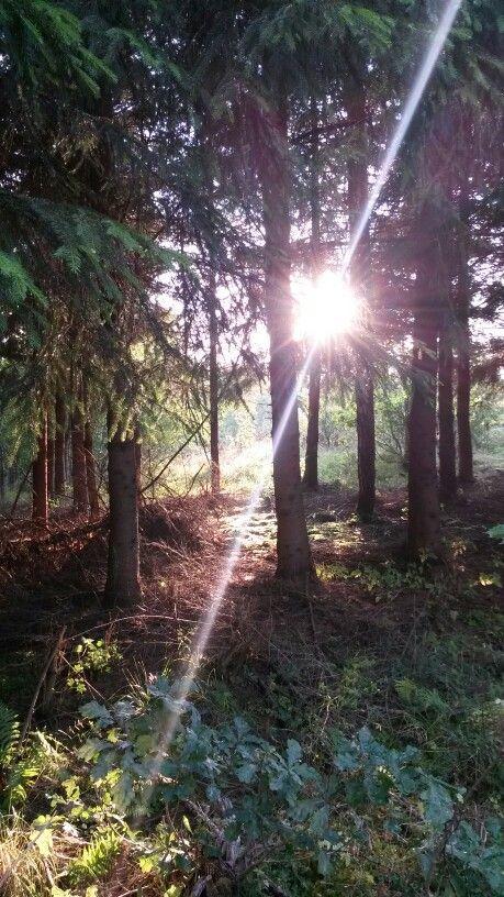 Woodland, Forest, Sunset, Sweden, Småland, Walk, Nature, Get Inspired. ↑