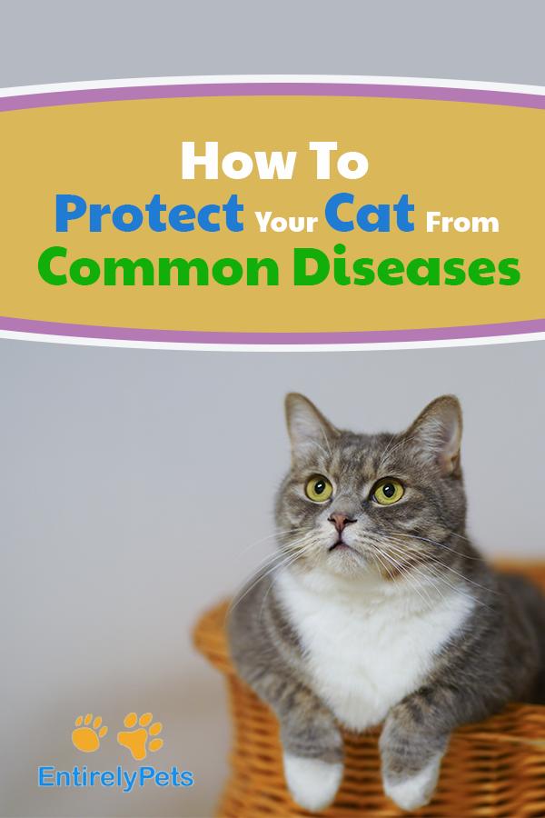 5 Ways Cats Get Feline Distemper Feline distemper, Cats