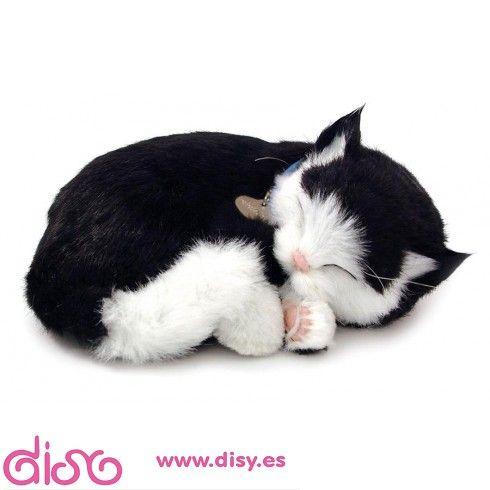 Pin En Cats Beutiful Things