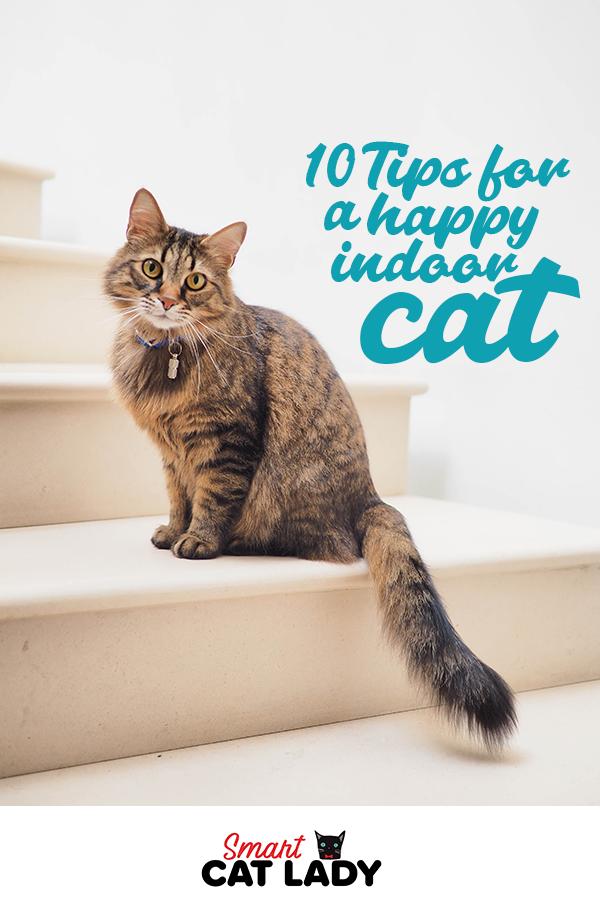 10 Tips For A Happy Indoor Cat Cats Indoor Cat Cat Problems