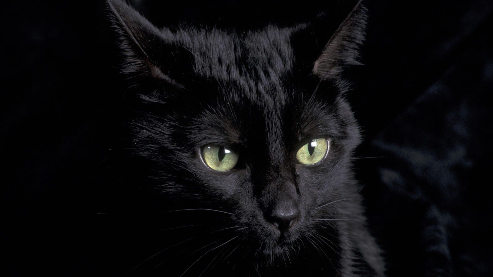 Black Cats Wallpaper Desktop Animal Wallpaperklix Com Cat Wallpaper Cats And Kittens Cats