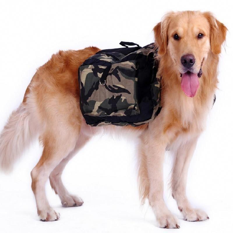 #bestwoof #dogsofinstagram#dailyfluff #bestwoof #puppy #socutetho #ILoveMyDog #mansbestfriend #dogtraining