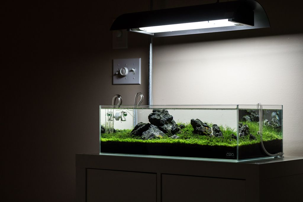 Ada 60f google search aquascape pinterest for Ada fish tank