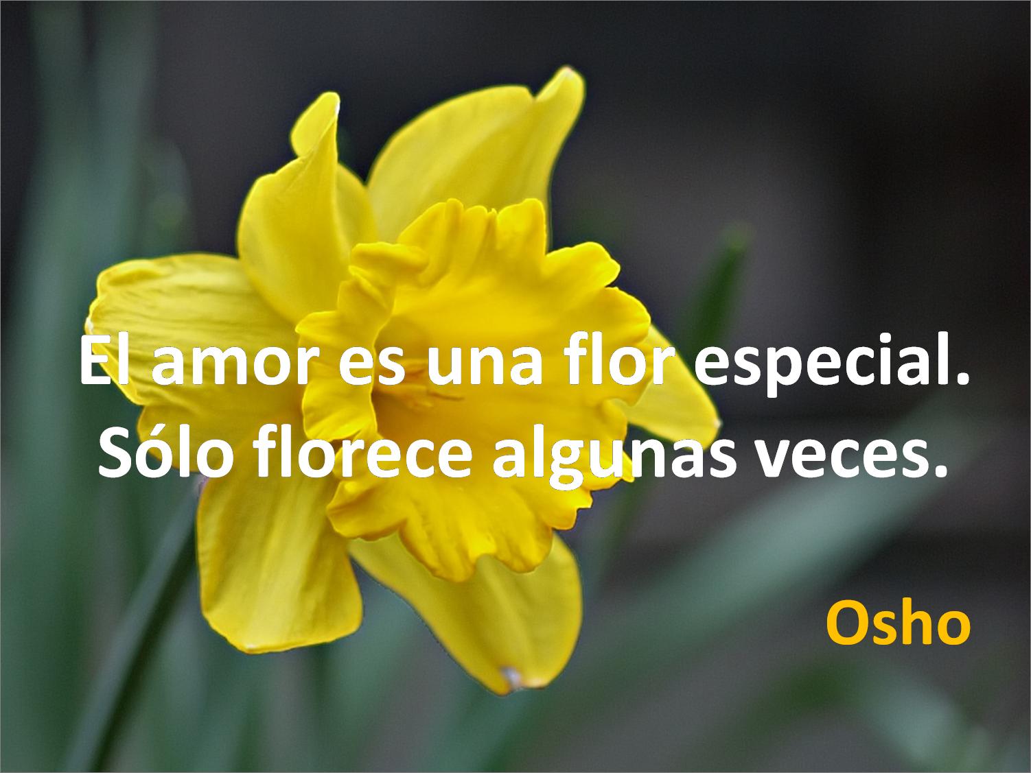 Lecciones para amar Frase célebre sobre el amor Osho
