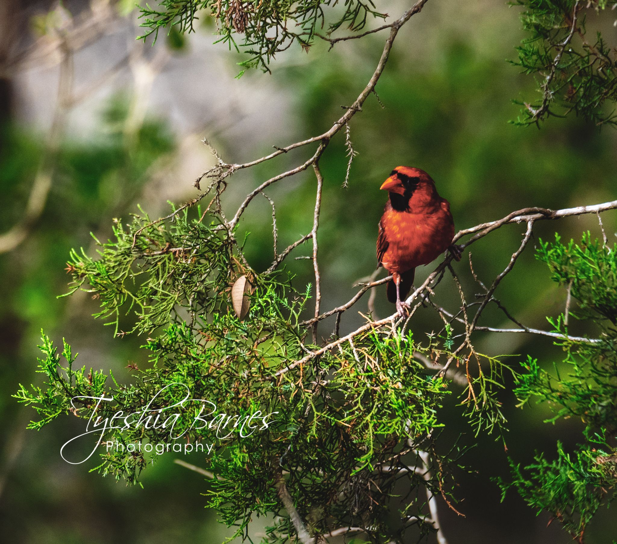 Open your mind to the possibilities of unity #naturephotography #blacklivesmatter #travel #travelphotographer #nature #landscape #commercialphotography #photographylover #photographylovers #photographylife #fineart #wildlife #cardinals #birds