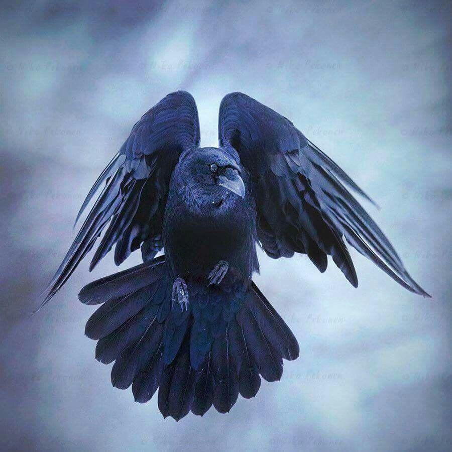 Raven Flight Nude Photos 98