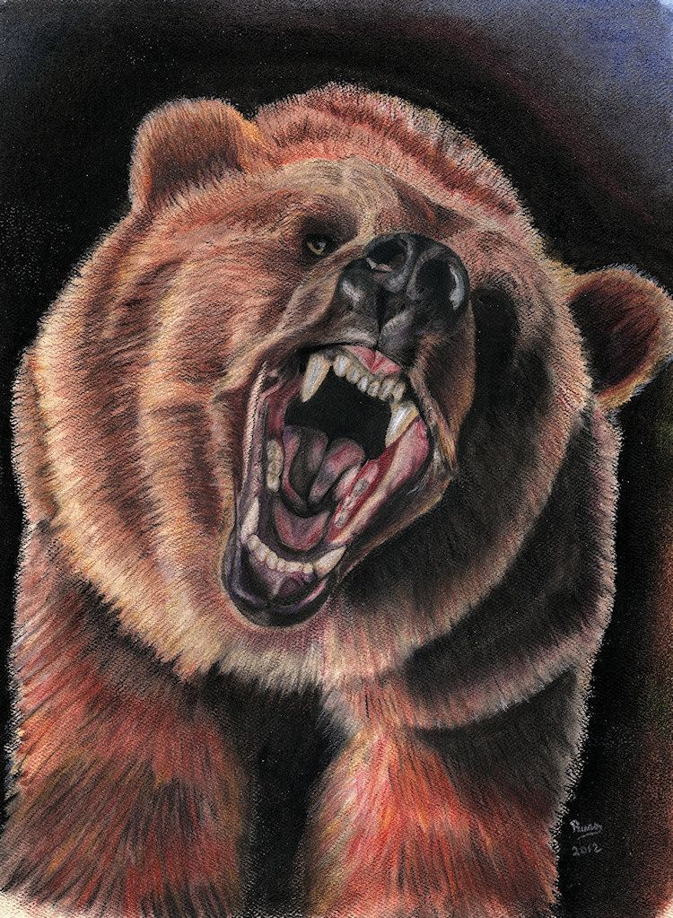 Grizzly Bear - Pastel and Charcoal | Inspiring Artwork ...