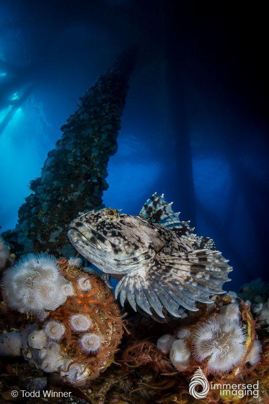 Canon 8 15mm Fisheye Lens Review Fish Eye Lens Underwater Photographer Underwater Photography