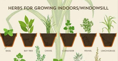Anyone Can Grow Herbs With This Super Helpful Chart Growing