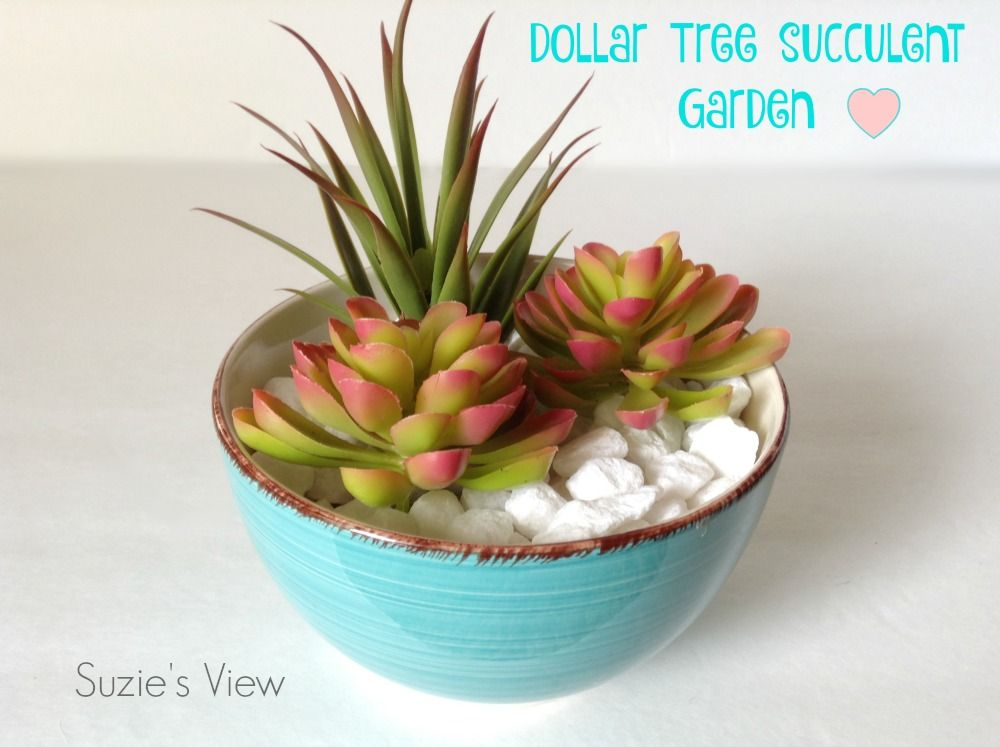 My Five Minute Dollar Tree Succulent Garden  Best Of WhatS Up