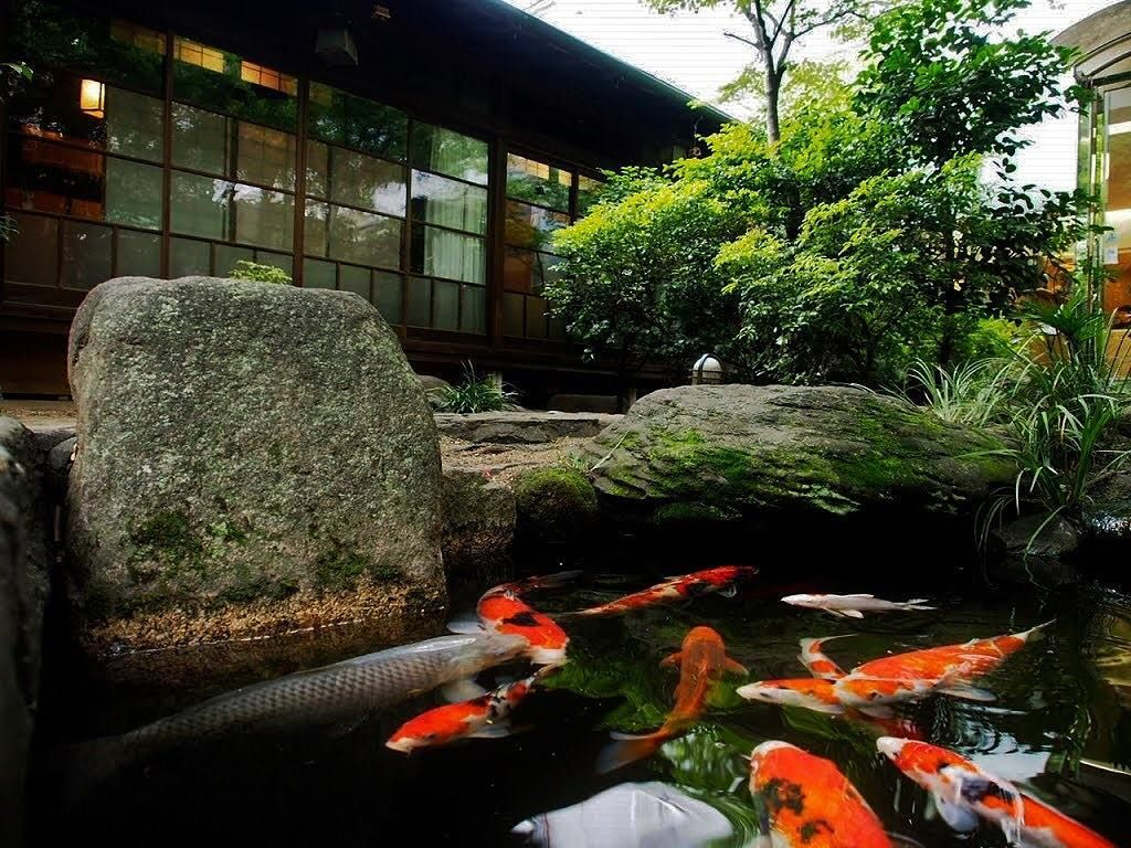 225b539eb828839222f38b6ce85b3b36 - The Koi Whisperer Sanctuary & Japanese Gardens