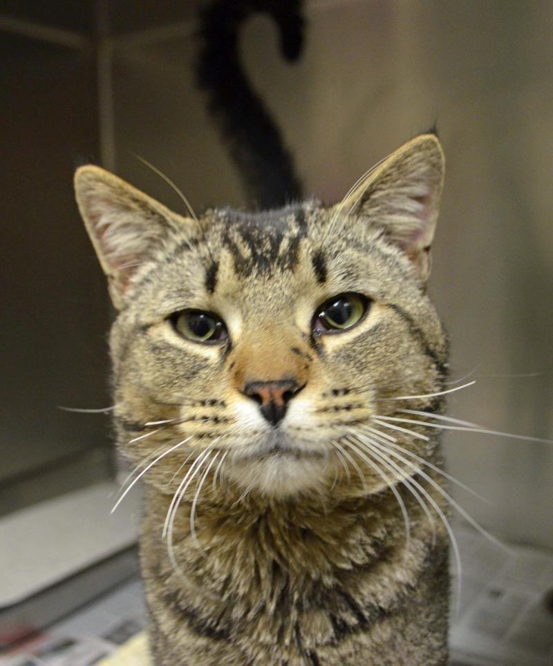 Adopt Ed on Adoption, Cats, Animals