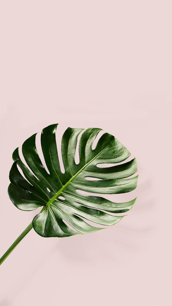 Tumblr iphone palm leaf pink backround wallpaper Leaves