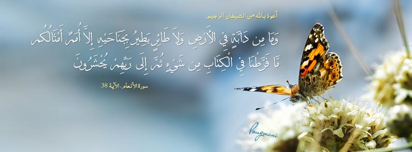 Image result for وما من دابة فى الارض ولا طائر یطیر