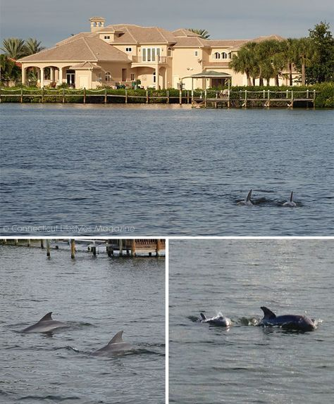 Spend A Weekend In Cocoa Beach Florida Dolphin Cruise Melbourne