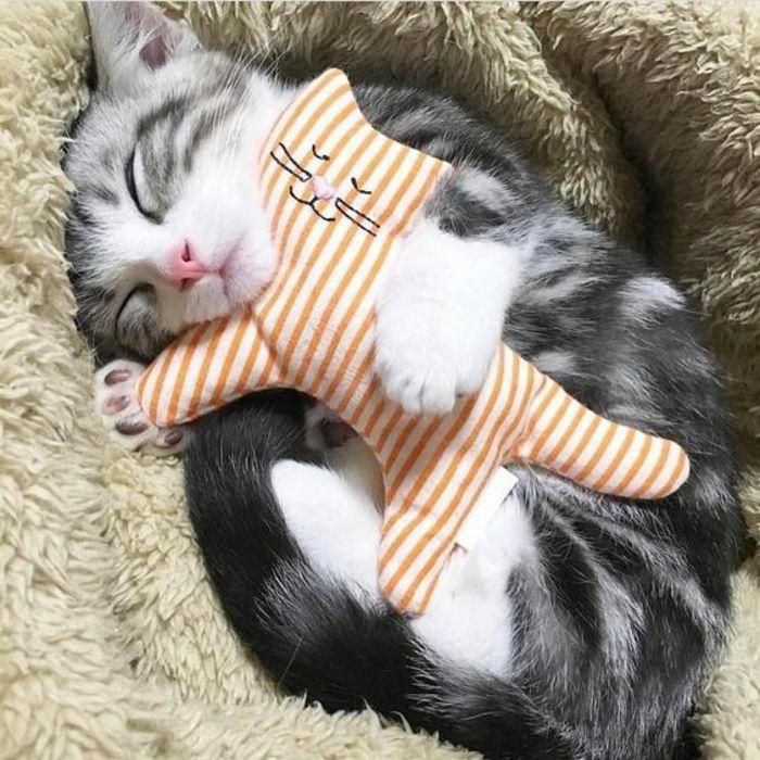 1001 animaux mignons qui vont vous donner un grand sourire jouet chat animaux mignons et mignon. Black Bedroom Furniture Sets. Home Design Ideas