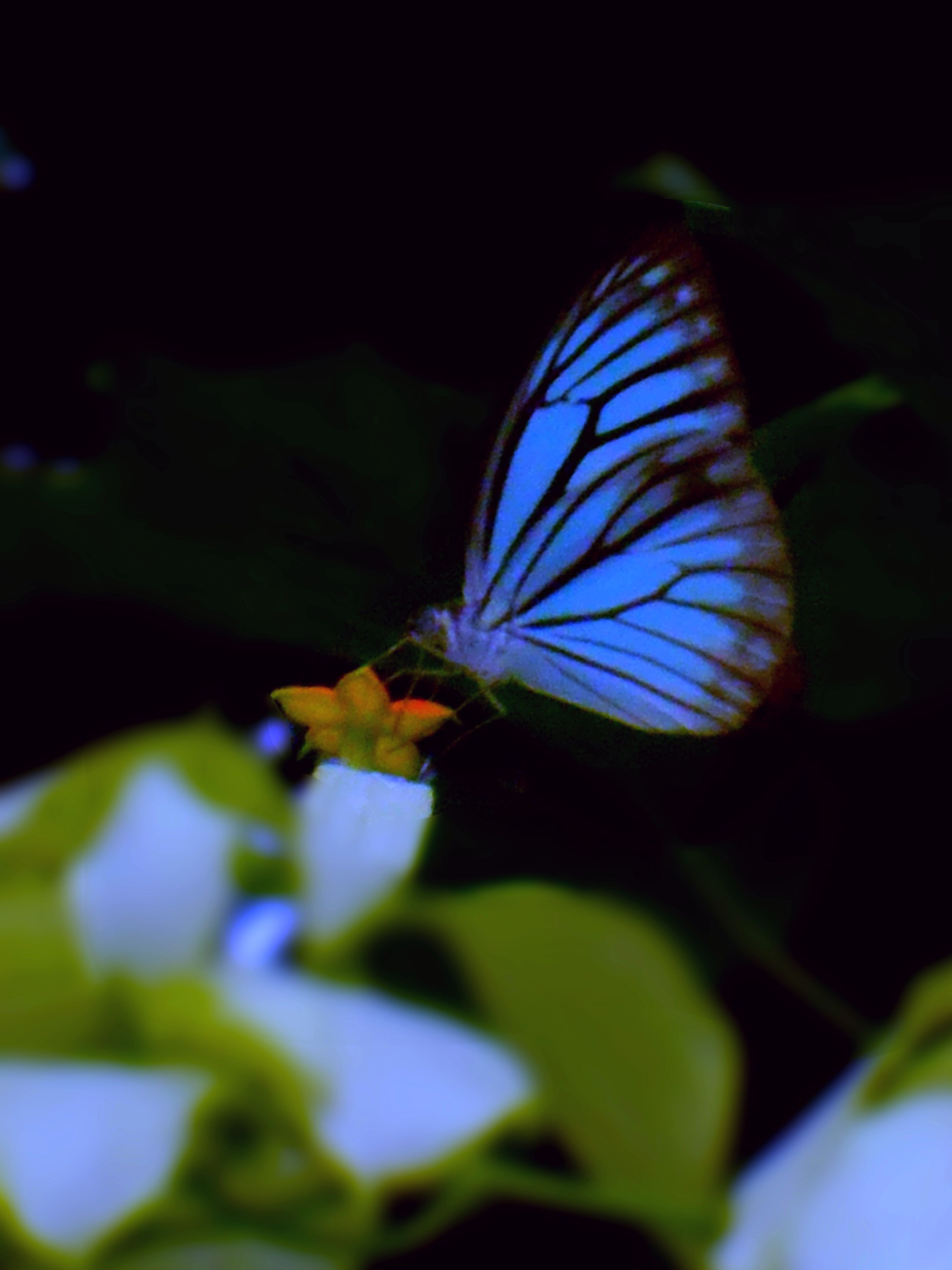 A Journey Started From There Where No One Cared Beautiful Butterflies Nature Photography