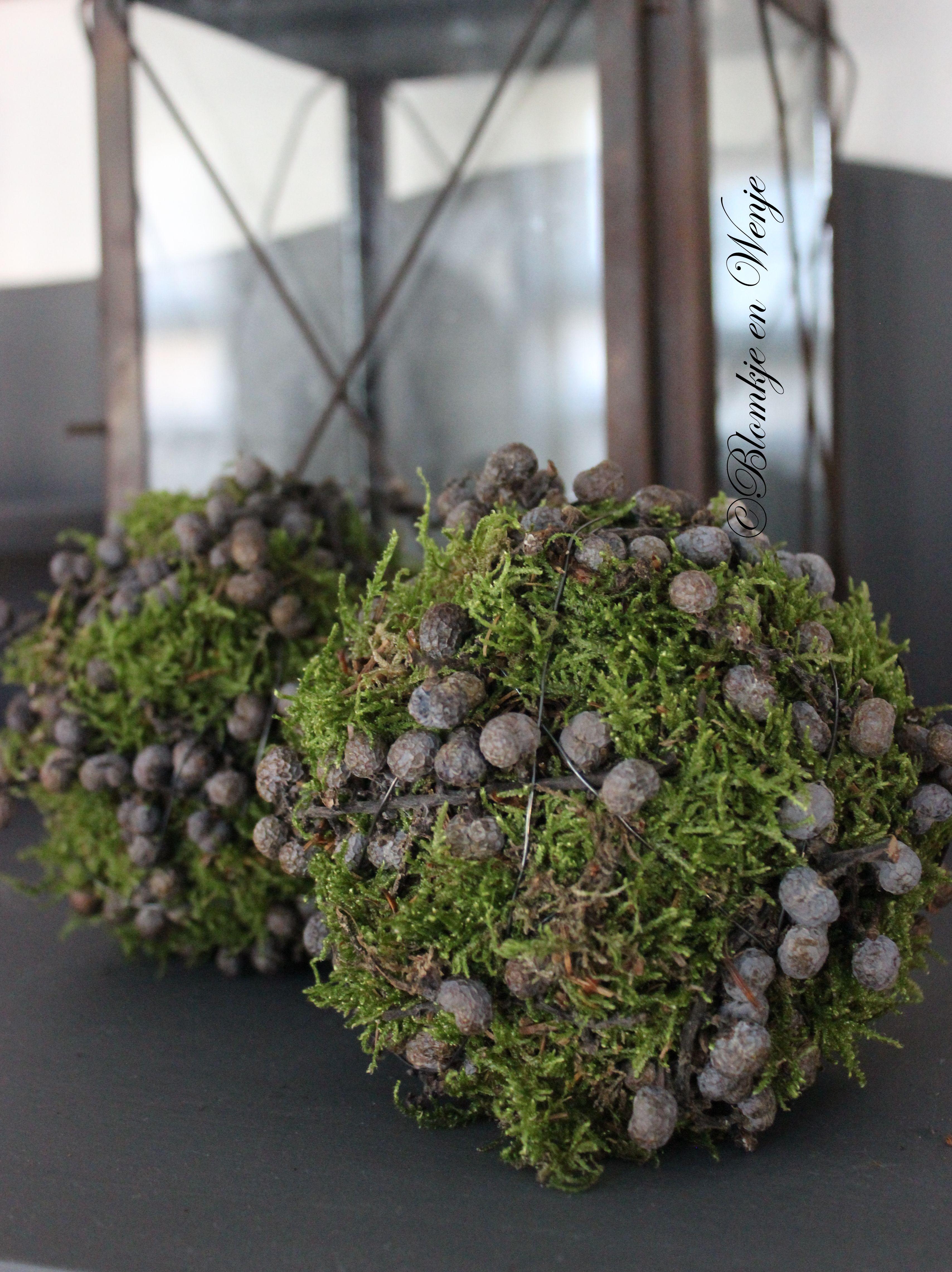 Dadelbollen stoer sober landelijk blomkje en wenje floral inspiration pinterest kerst - Gartendeko winter ...