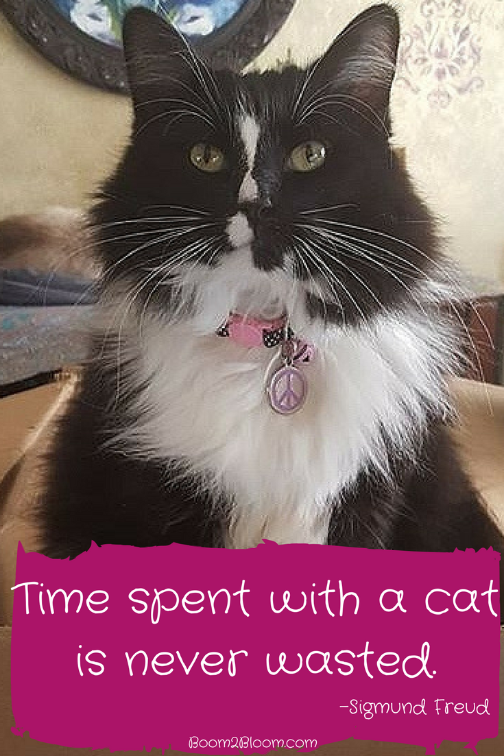 Time Spent With A Cat Is Never Wasted Quote By Sigmund Freud Cat Quotes Cats Catquotes