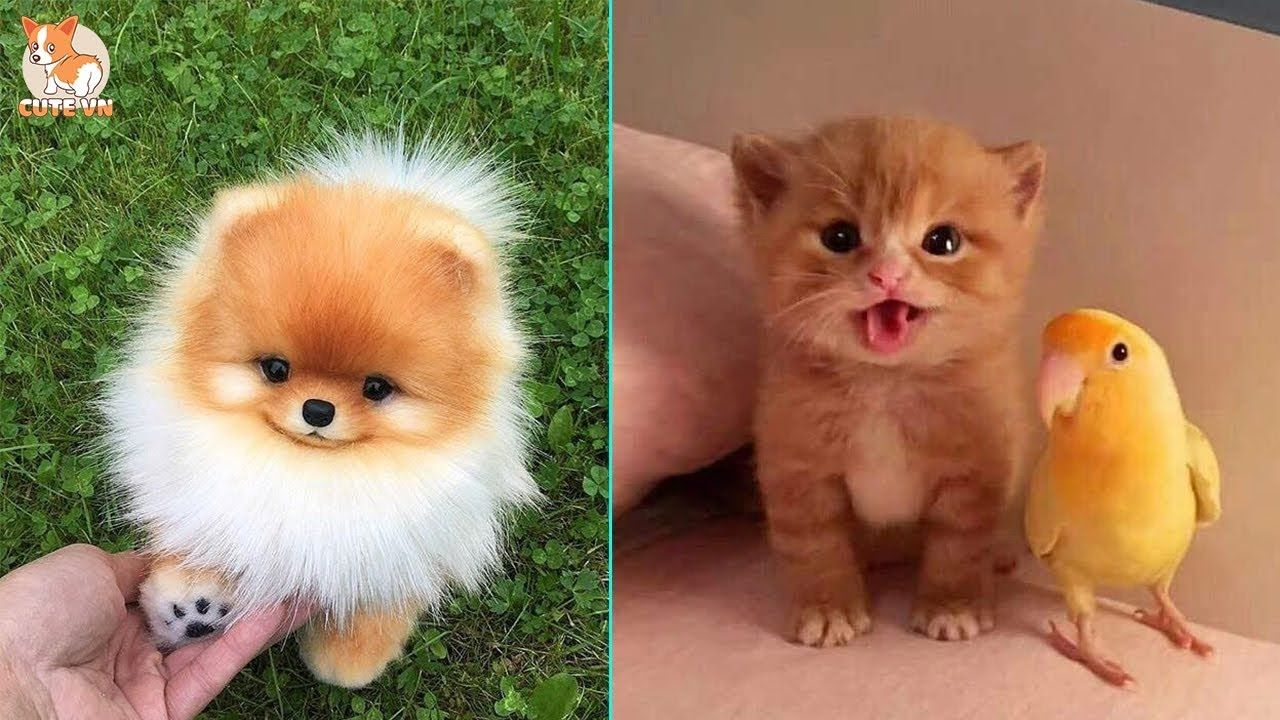 Tiktok Pets Funny And Cute Pets Compilation 6 Cutevn Baby Animal Videos Cute Cats And Dogs Cute Baby Animals