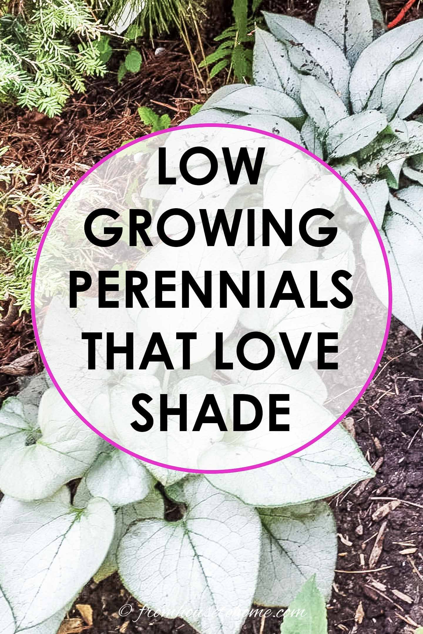 Perennial Ground Cover Full Sun: 21 Stunning Perennial Ground Cover Plants That Thrive In