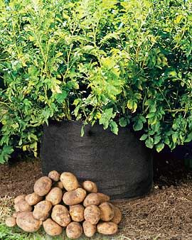 What is an easy way to grow potatoes?