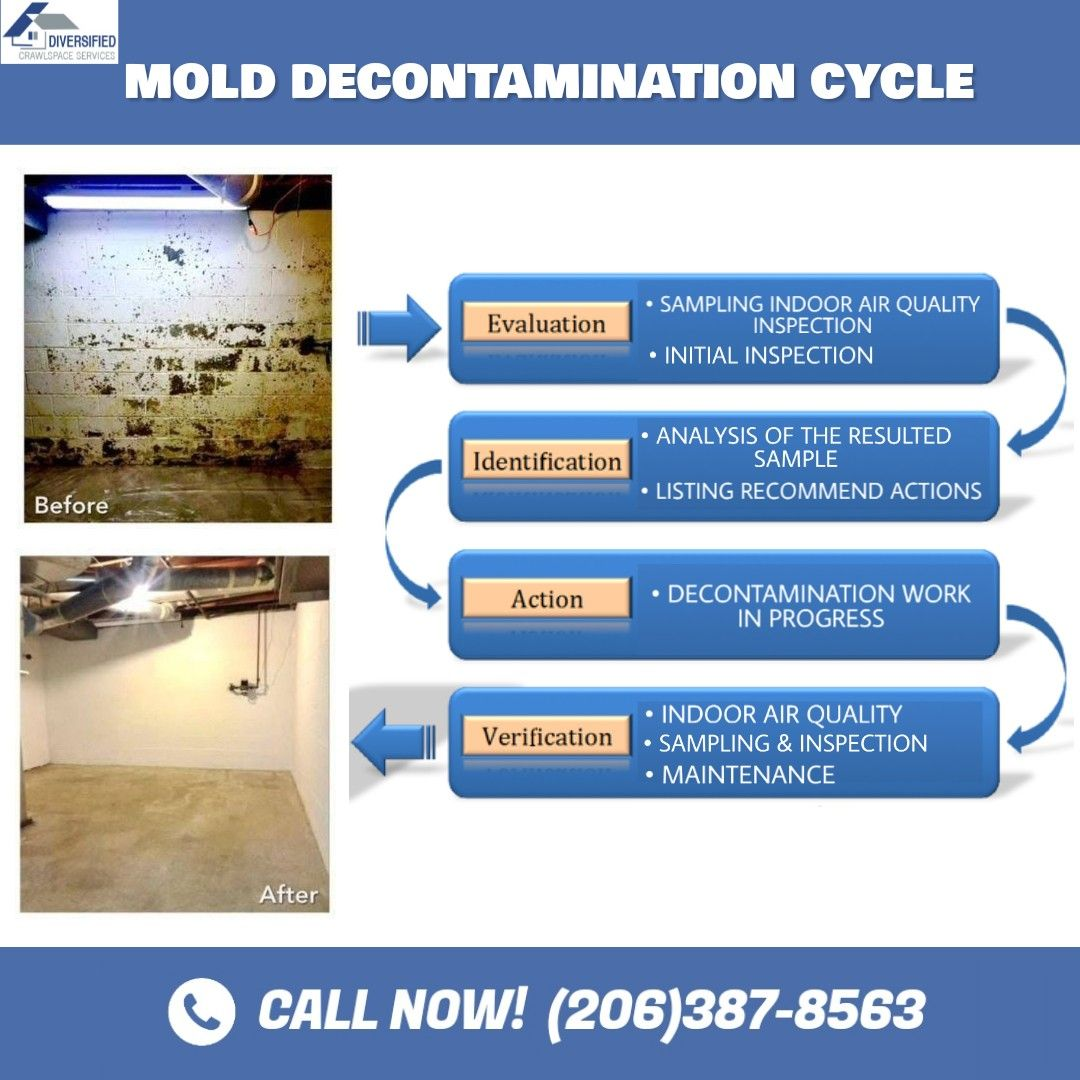 Mold Decontamination Cycle in 2020 Indoor air, Molding