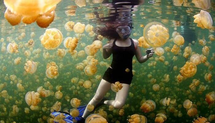12.Weirdest-Jellyfish-Lake-Palau