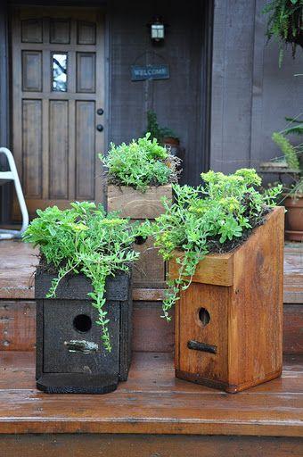 Living Roof Bluebird Houses Birdie Bed And Breakfast