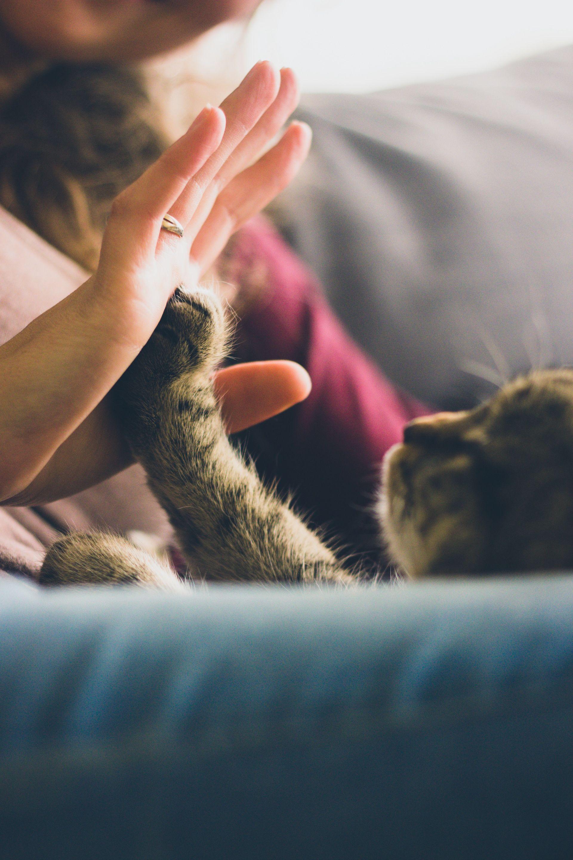 Gato Mujer Manos Mascota Amor 1606242241 Cats Buy Pets Cat Care