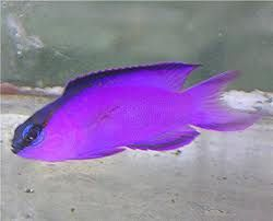 Pin By Debbie Lunsford On My Aquarium Would Contain Fish Pet Animals Purple