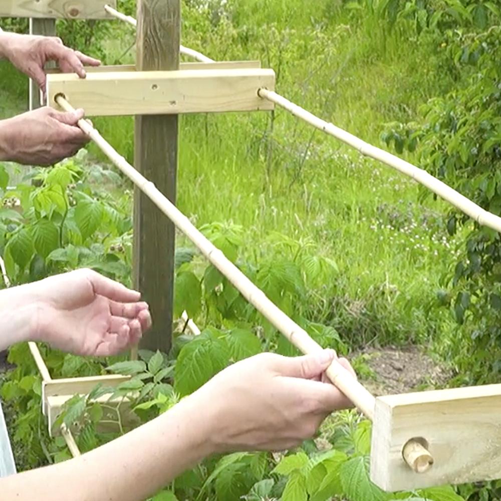 Video Himbeerspalier Bauen Garten Ideen Gemuse Garten Bepflanzen Spalier