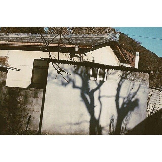 proper_distance / 나무그림자. / #골목 #담벼락 #그림자 #식물 / 2014 01 14 /