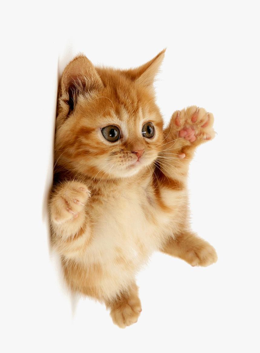 Pin On Beautiful Kitty