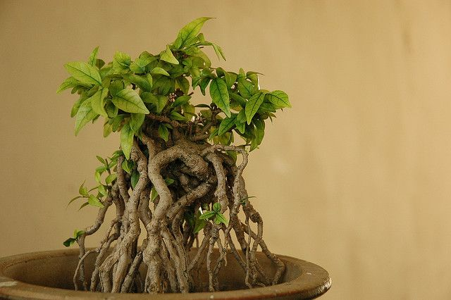 Assignment Bonsai | Flickr - Photo Sharing!