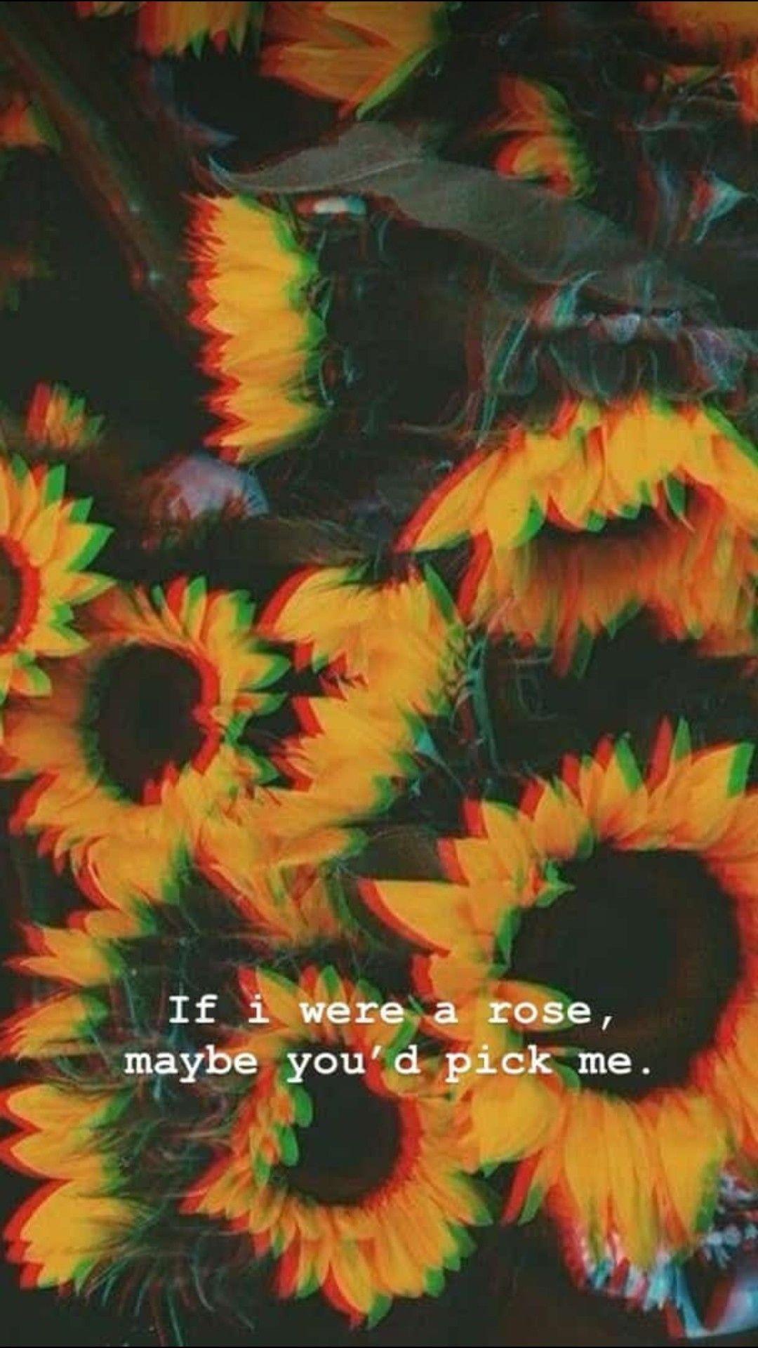 Image Result For Sunflower Wallpaper Iphone 7 Sunflower