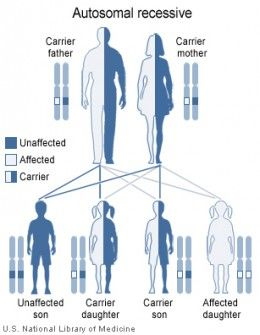 Heterozygotes carry a disease causing mutation, but will generally not display characteristics of the genetic disease.