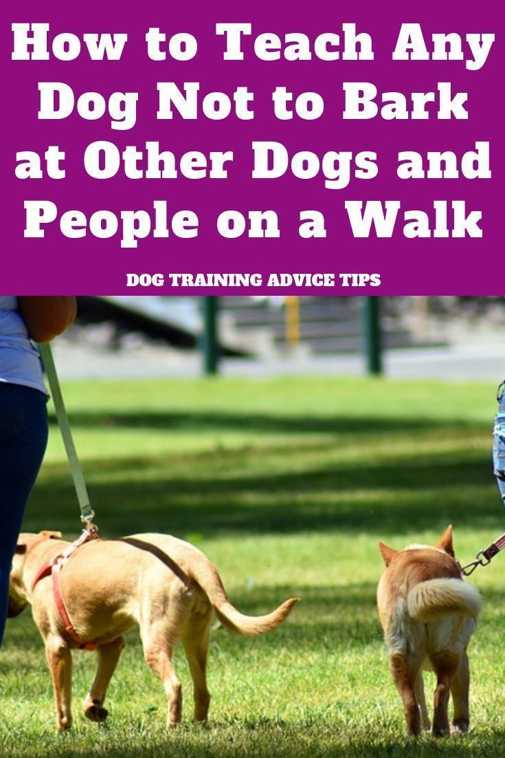 How to Teach Any Dog Not to Bark at Other Dogs and People on a Walk - Dog Training Advice Tips