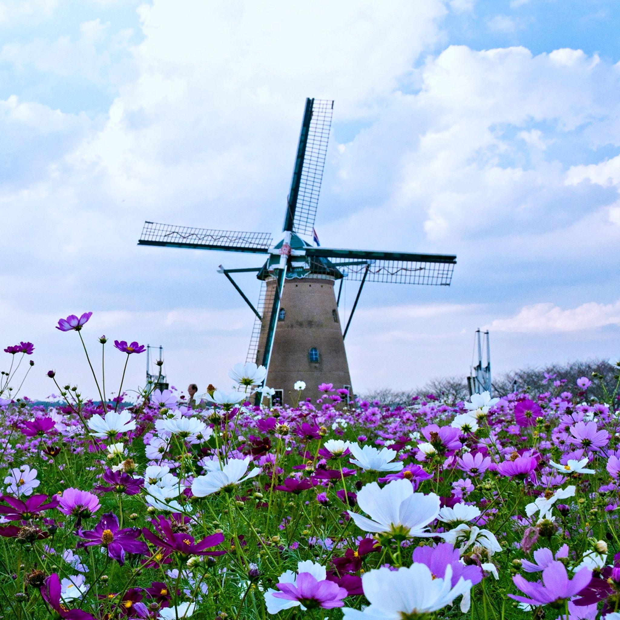 Field Flower Landscape Nature Spring Windmill Tap To See More Windmill Stock Wallpapers Mobile9 Stock Wallpaper Wallpaper Windmill