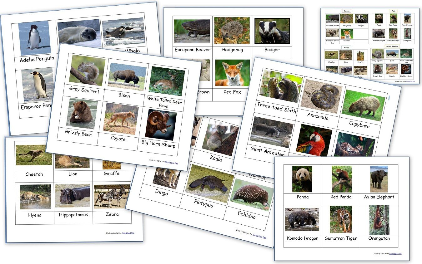 Animals Around The World Montessori 3 Part Cards