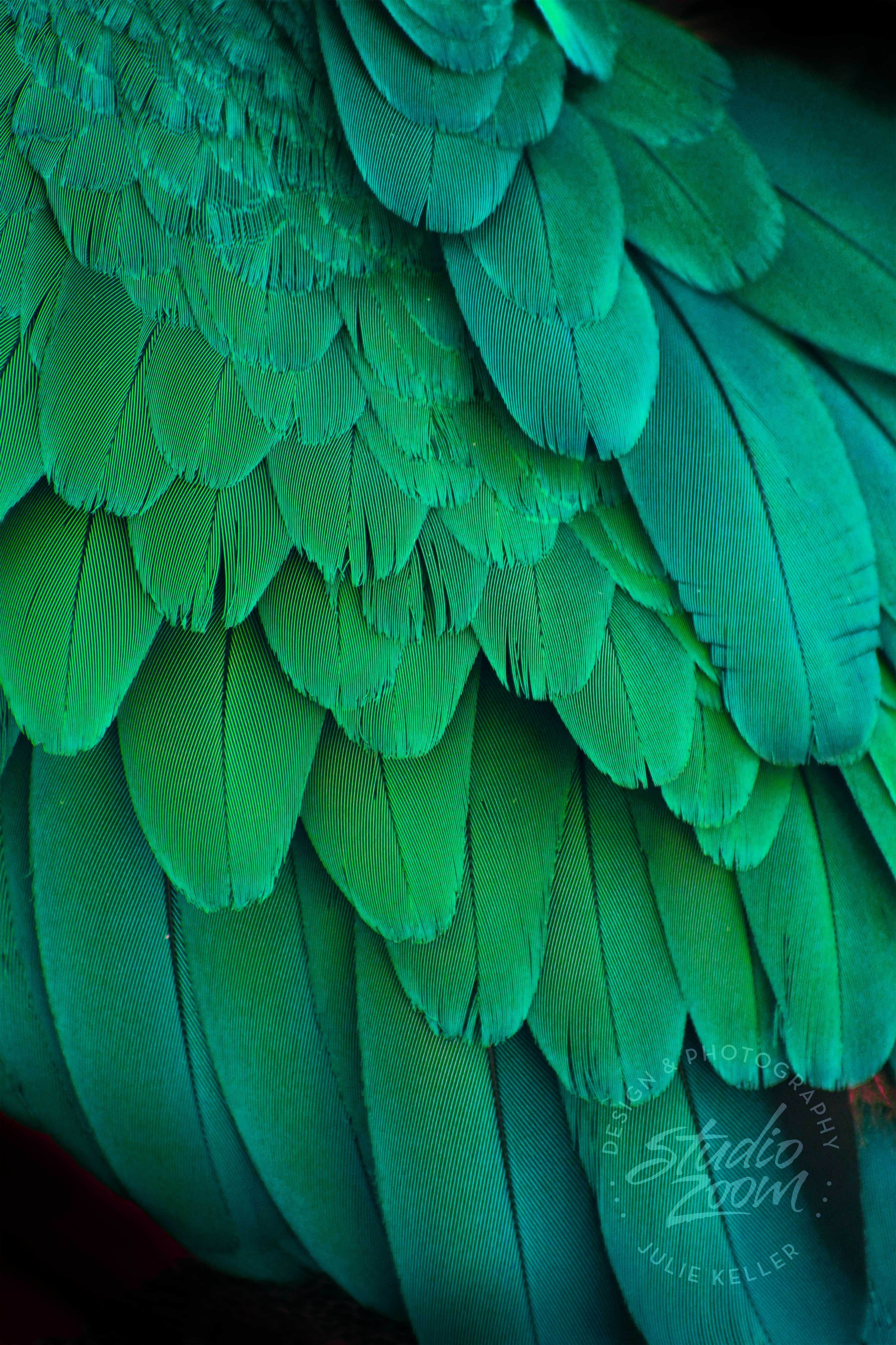 Green Macaw Parrot Feathers Photography Print, Exotic Wildlife and ...