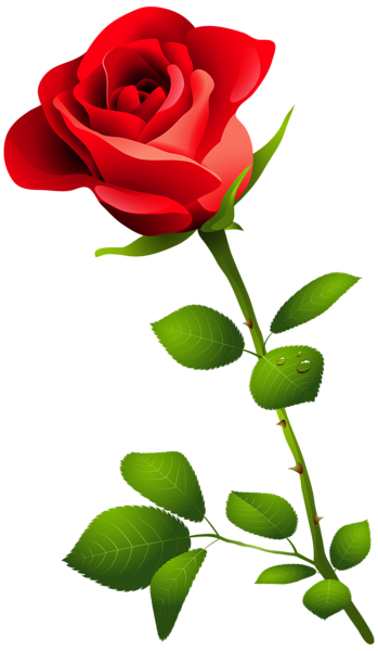 Red Rose With Stem Png Clipart Image Flower Phone Wallpaper Rose Flower Png Flower Images